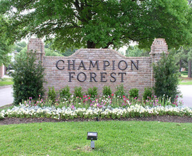 Champion Forest - Ruben and Nancy